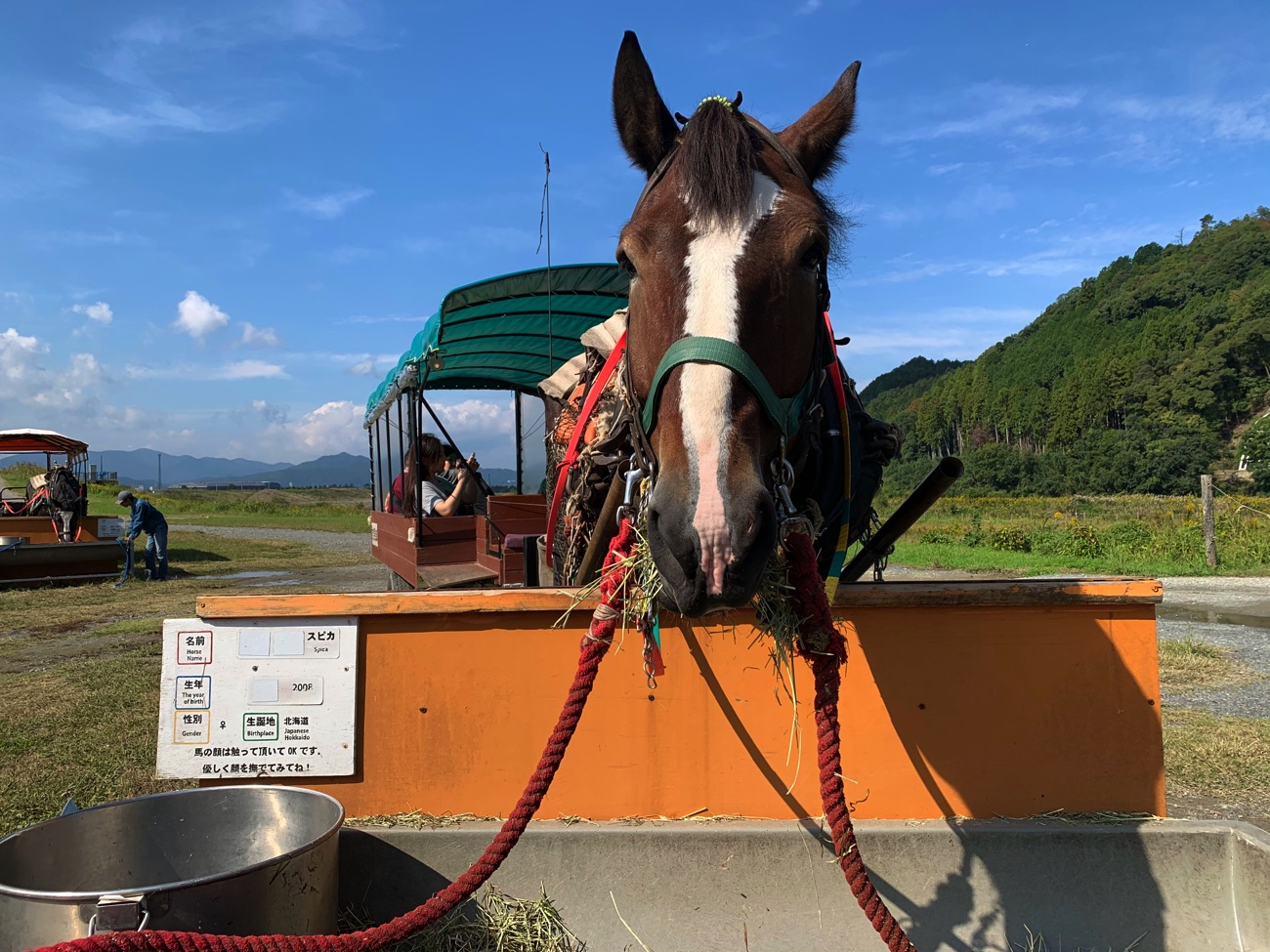 乗船場まで馬車で行くこともできる