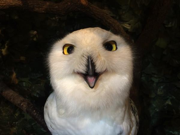 「京都のフクロウの森」は小学生の女の子でも楽しめる! ふっかふかで気持ちイイ〜!! | ごりらのせなか