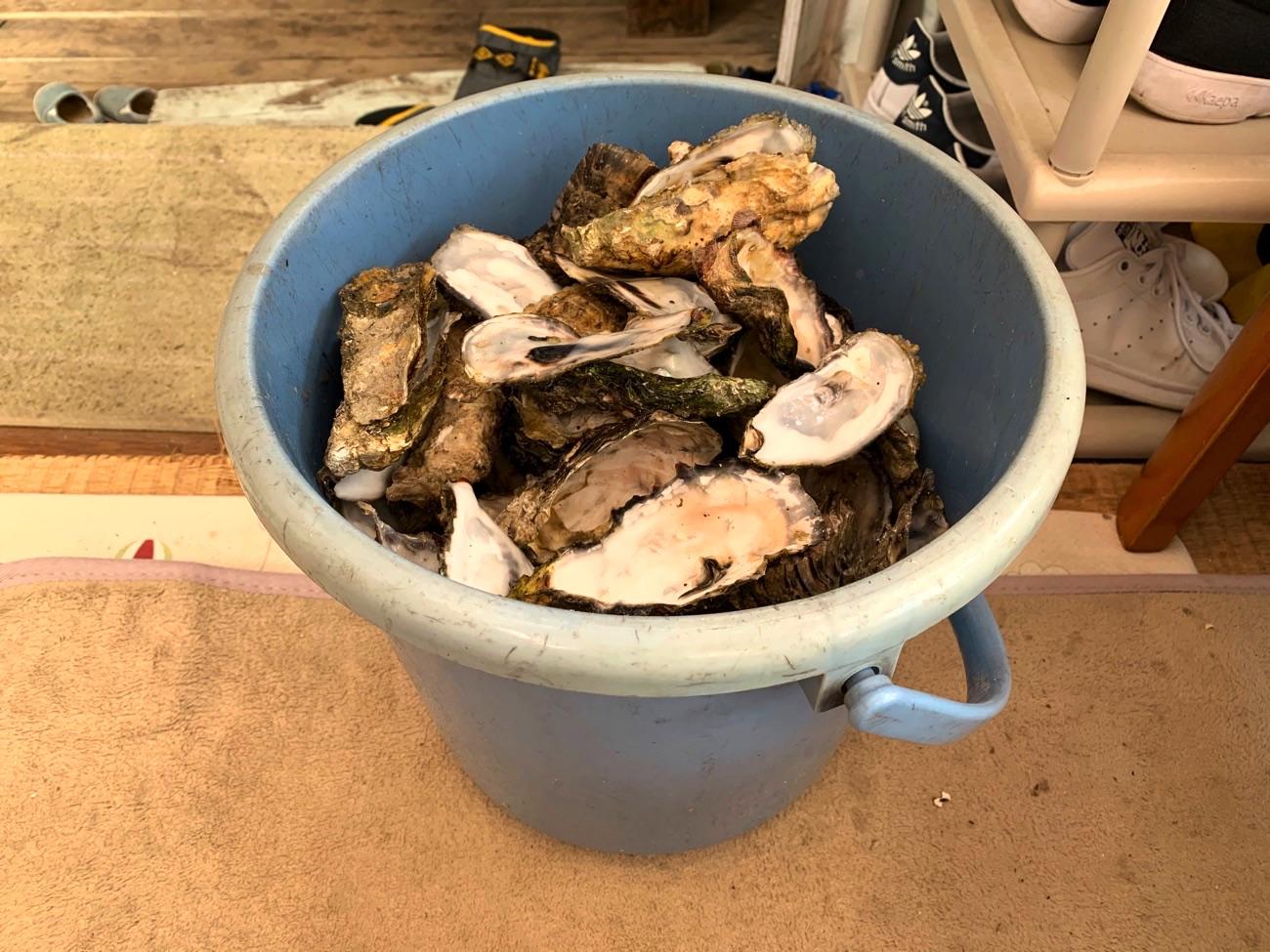 牡蠣の殻はバケツに