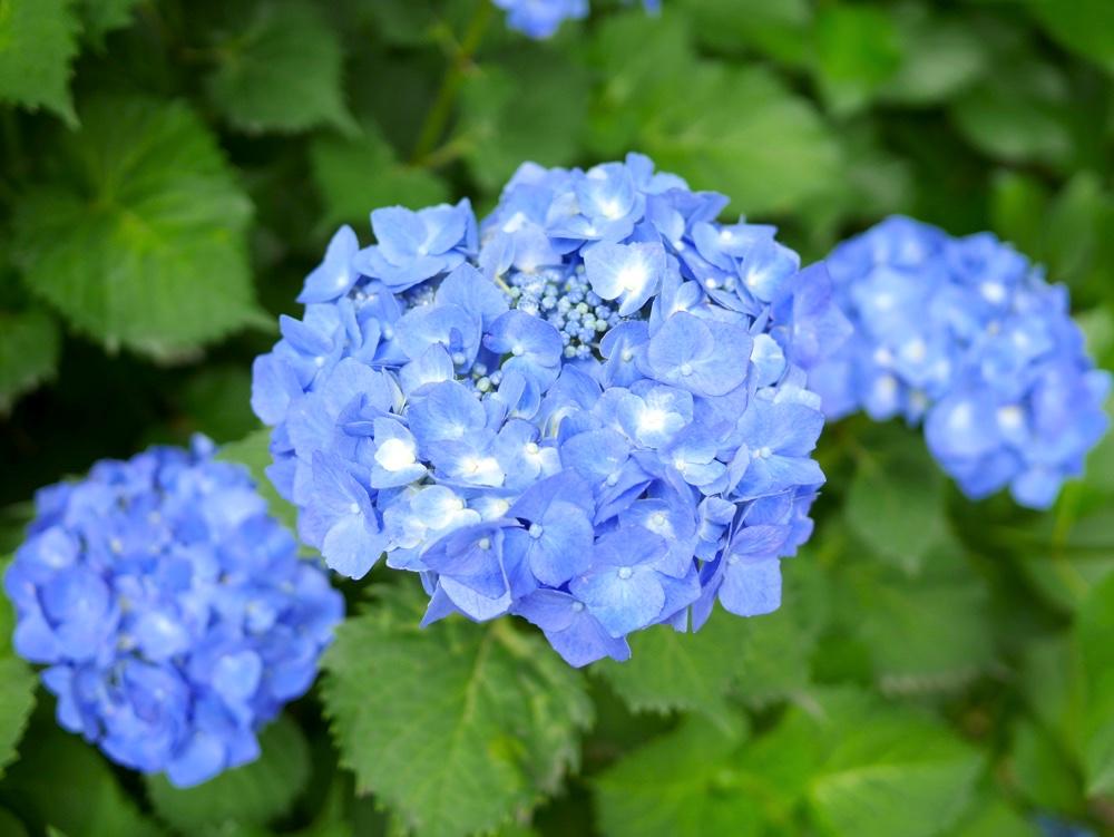 さわやかな青色