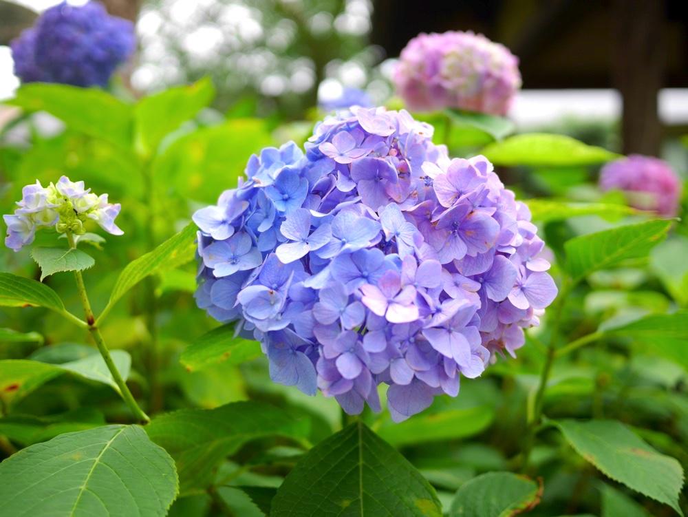 これは青? 紫?