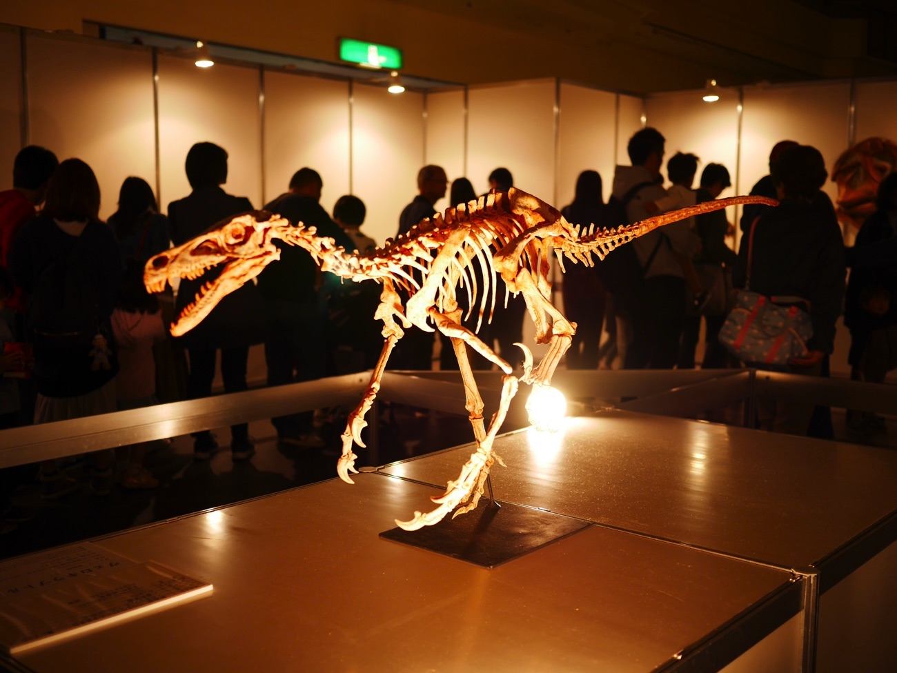 ヴェロキラプトルの骨格模型