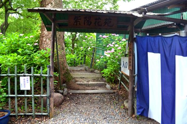 第一紫陽花苑の入口